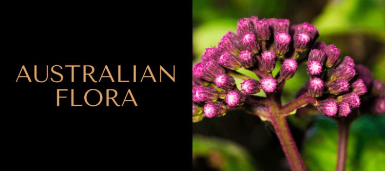 australian-flora-australian-teacher